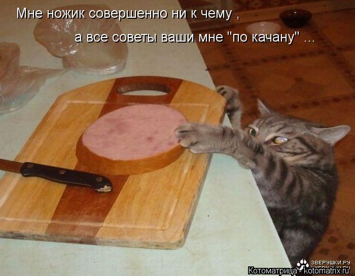 """Котоматрица: Мне ножик совершенно ни к чему , а все советы ваши мне """"по качану"""" ..."""