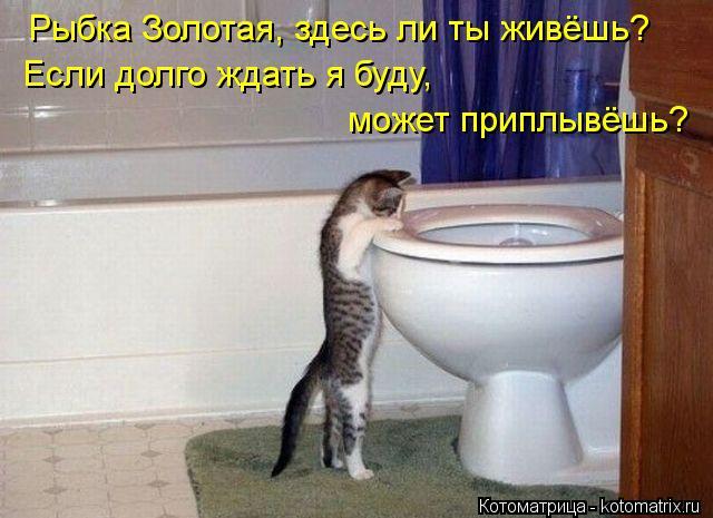 Котоматрица: Рыбка Золотая, здесь ли ты живёшь? Если долго ждать я буду,  может приплывёшь?