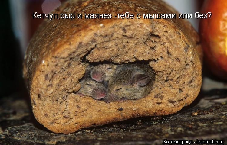 Котоматрица: Кетчуп,сыр и маянез -тебе с мышами или без?