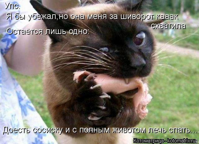 Котоматрица: Упс. Я бы убежал,но она меня за шиворот кааак схватила Остаётся лишь одно: Доесть сосиску и с полным животом лечь спать.........