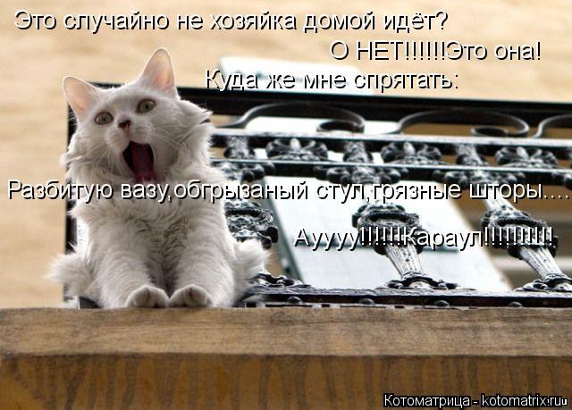 Котоматрица: Это случайно не хозяйка домой идёт? О НЕТ!!!!!!Это она! Куда же мне спрятать: Разбитую вазу,обгрызаный стул,грязные шторы..... Ауууу!!!!!!Караул!!!!!!