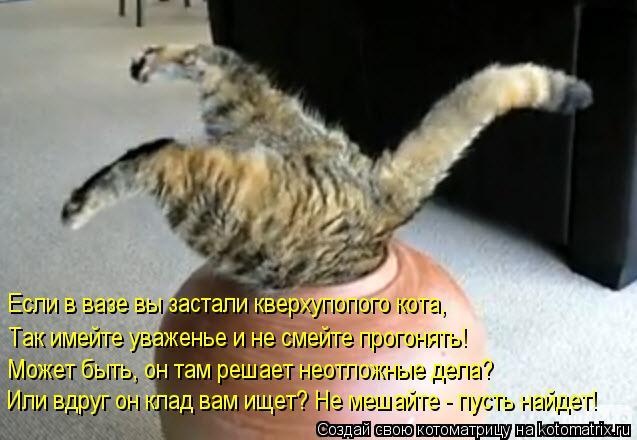 Котоматрица: Если в вазе вы застали кверхупопого кота, Так имейте уваженье и не смейте прогонять! Может быть, он там решает неотложные дела? Или вдруг он