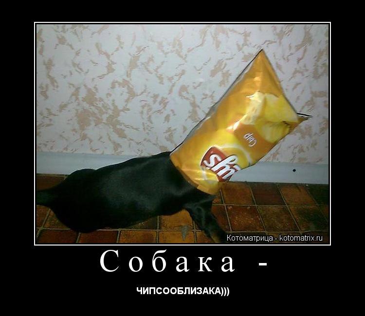Котоматрица: Собака - ЧИПСООБЛИЗАКА)))