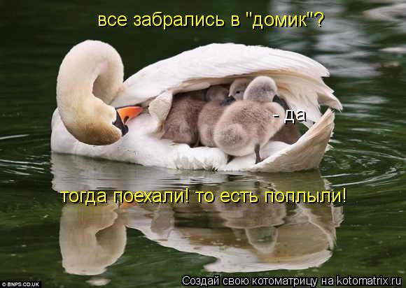 """Котоматрица: все забрались в """"домик""""? - да тогда поехали! то есть поплыли!"""