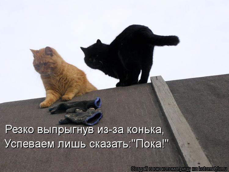 """Котоматрица: Резко выпрыгнув из-за конька,  Успеваем лишь сказать:""""Пока!"""""""