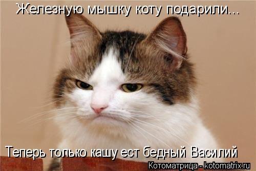 Котоматрица: Железную мышку коту подарили... Теперь только кашу ест бедный Василий