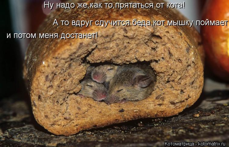 Котоматрица: Ну надо же,как то,прятаться от кота! А то вдруг случится беда,кот мышку поймает , и потом меня достанет!  и потом меня достанет!