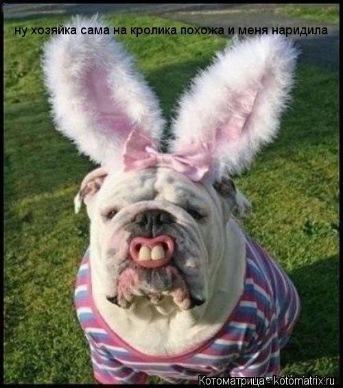 Котоматрица: ну хозяйка сама на кролика похожа и меня наридила