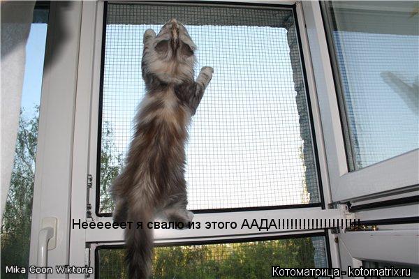 Котоматрица: Неееееет я свалю из этого ААДА!!!!!!!!!!!!!!!!!!!!