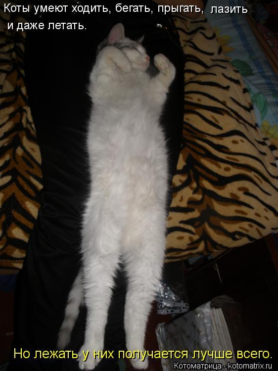 Котоматрица: Коты умеют ходить, бегать, прыгать,  лазить  и даже летать.  Но лежать у них получается лучше всего.