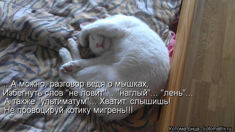 """Котоматрица: ...А можно, разговор ведя о мышках, Избегнуть слов """"не ловит""""... """"наглый""""... """"лень""""... А также """"ультиматум""""... Хватит, слышишь! Не провоцируй котику ми"""