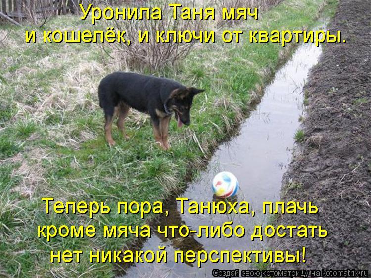 Котоматрица: Уронила Таня мяч и кошелёк, и ключи от квартиры. Теперь пора, Танюха, плачь кроме мяча что-либо достать нет никакой перспективы!