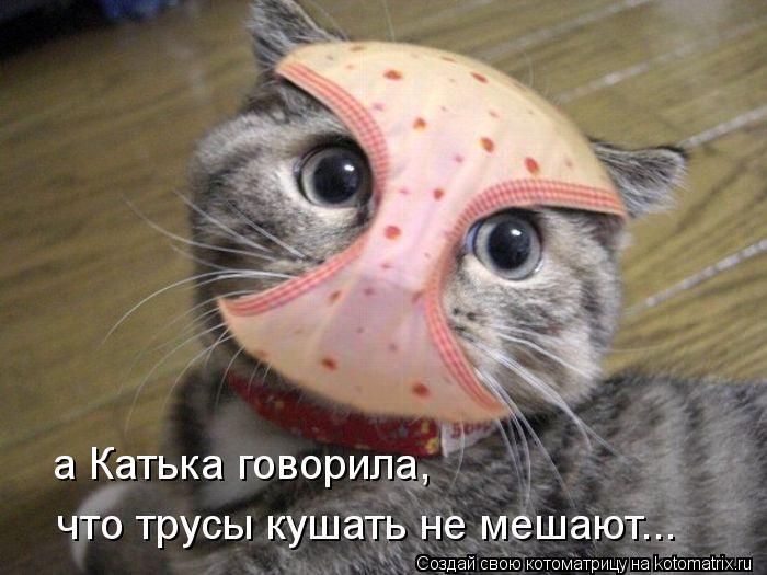 Котоматрица: а Катька говорила, что трусы кушать не мешают...