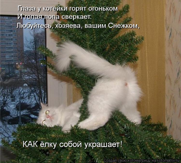 Котоматрица: Глаза у котейки горят огоньком И голая попа сверкает. Любуйтесь, хозяева, вашим Снежком, КАК ёлку собой украшает!