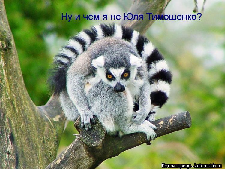 Котоматрица: Ну и чем я не Юля Тимошенко?