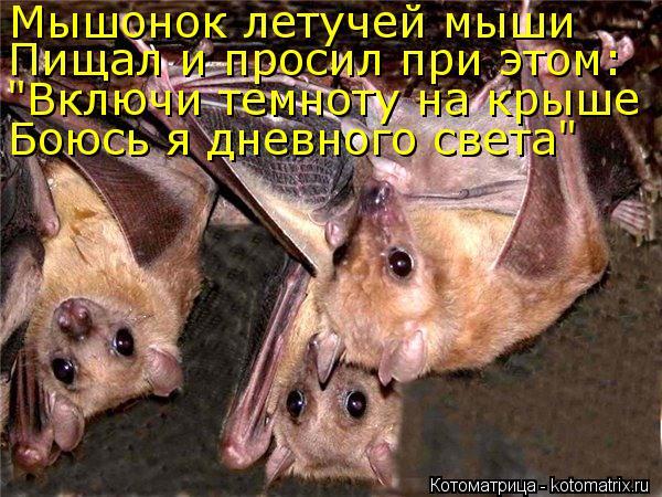 """Котоматрица: Мышонок летучей мыши Пищал и просил при этом: """"Включи темноту на крыше Боюсь я дневного света"""""""