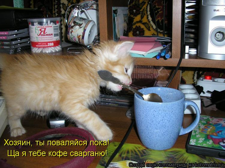 Котоматрица: Хозяин, ты поваляйся пока! Ща я тебе кофе сварганю!