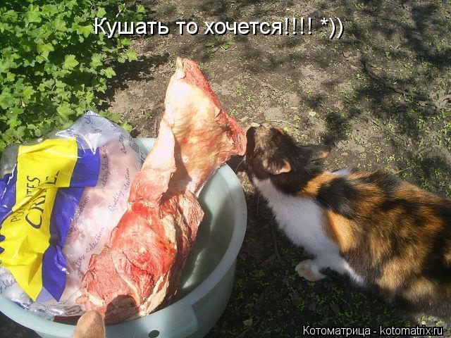Котоматрица: Кушать то хочется!!!! *))
