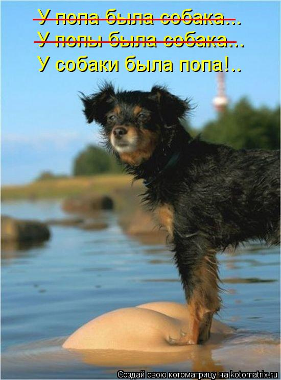 Котоматрица: У попа была собака... __________________ У попы была собака... __________________ У собаки была попа!..