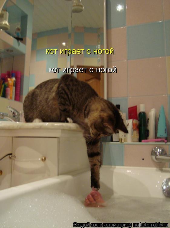 Котоматрица: кот играет с ногой кот играет с ногой