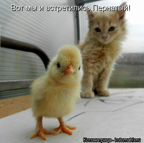 Котоматрица: Вот мы и встретились,Пернатый!