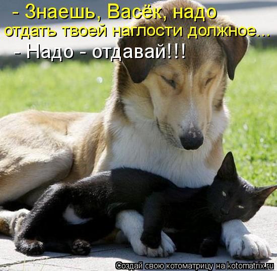 Котоматрица: - Знаешь, Васёк, надо отдать твоей наглости должное... - Надо - отдавай!!!