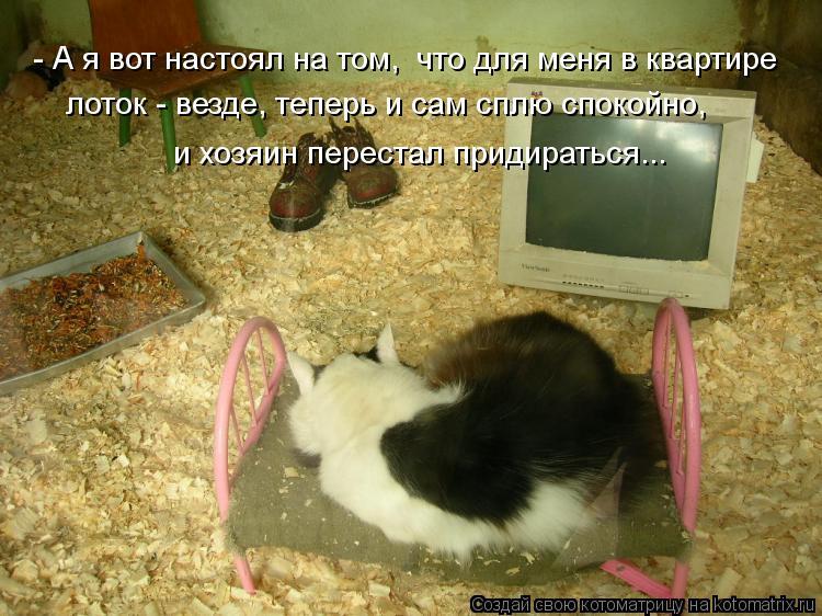 Котоматрица: - А я вот настоял на том,  что для меня в квартире  лоток - везде, теперь и сам сплю спокойно, и хозяин перестал придираться...