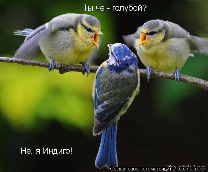Котоматрица: Ты че - голубой? Не, я Индиго!