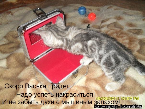 Котоматрица: Скоро Васька придет! Надо успеть накраситься! И не забыть духи с мышиным запахом!