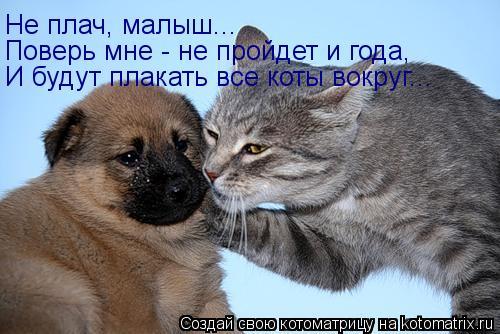Котоматрица: Не плач, малыш... Поверь мне - не пройдет и года, И будут плакать все коты вокруг...