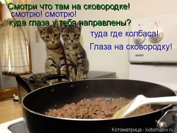 Котоматрица: Смотри что там на сковородке! смотрю! смотрю! куда глаза у тебя направлены? туда где колбаса! Глаза на сковородку!