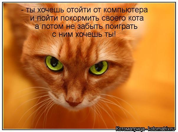 Котоматрица: - ты хочешь отойти от компьютера и пойти покормить своего кота а потом не забыть поиграть с ним хочешь ты!