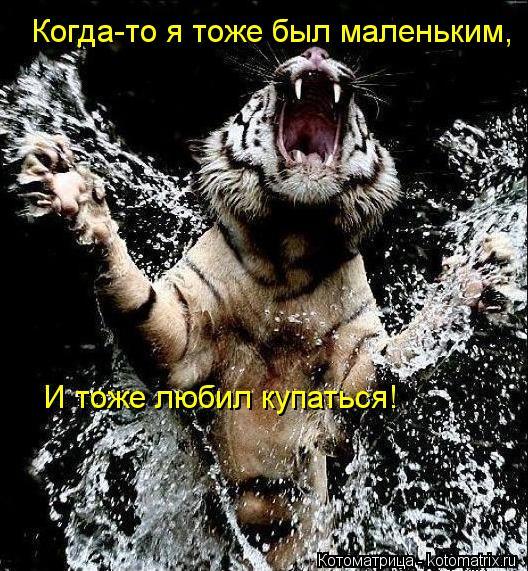 Котоматрица: Когда-то я тоже был маленьким, И тоже любил купаться!