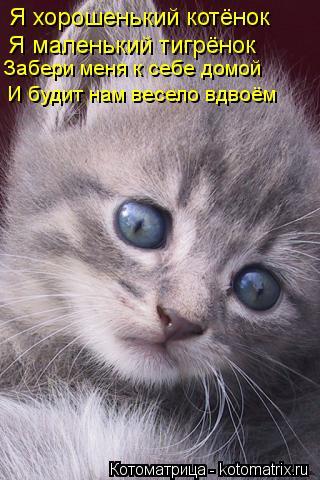 Котоматрица: Я хорошенький котёнок Я маленький тигрёнок Забери меня к себе домой И будит нам весело вдвоём