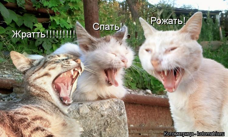 Котоматрица: Жратть!!!!!!!!! Спать! Рожать!
