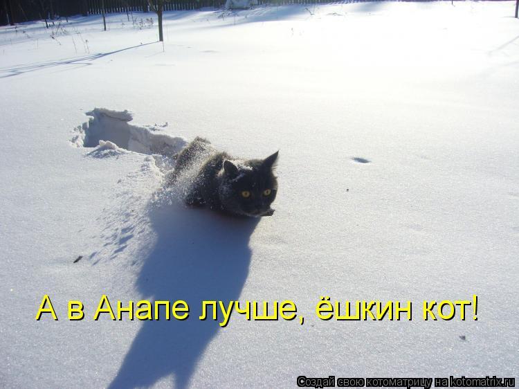 Котоматрица: А в Анапе лучше, ёшкин кот!