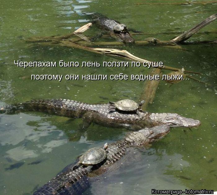 Котоматрица: Черепахам было лень ползти по суше, поэтому они нашли себе водные лыжи...