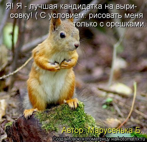 Котоматрица: Я! Я - лучшая кандидатка на выри- совку! ( С условием: рисовать меня   только с орешками.)  Автор: Марусенька Б.