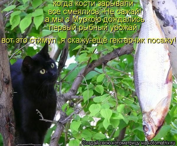 Котоматрица: когда кости зарывали все смеялись:-Не сажай! а мы с Муркою дождались первый рыбный урожай вот это стимул ,я скажу-ещё гектарчик посажу!