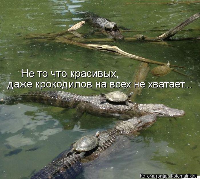 Котоматрица: даже крокодилов на всех не хватает... Не то что красивых,