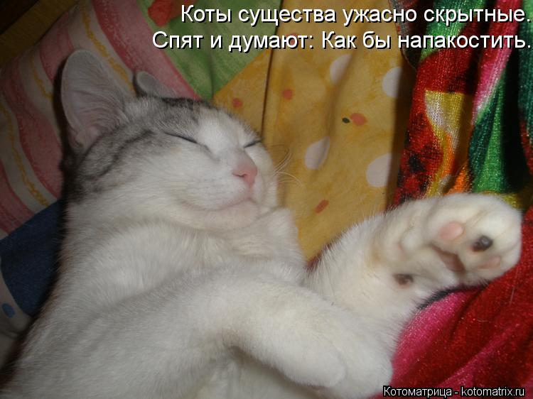 Котоматрица: Коты существа ужасно скрытные.  Спят и думают: Как бы напакостить.