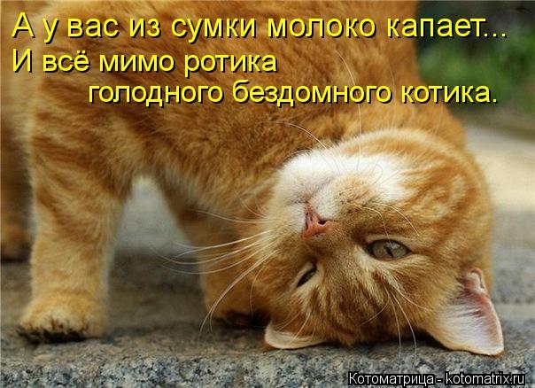 Котоматрица: А у вас из сумки молоко капает... И всё мимо ротика  голодного бездомного котика.