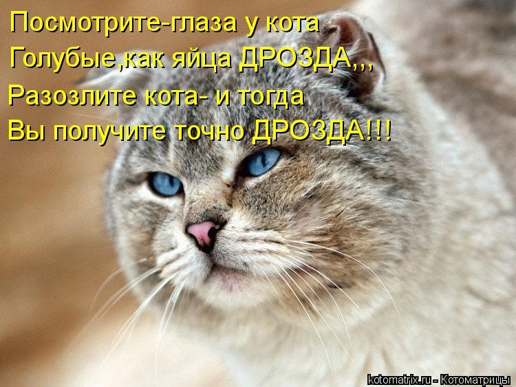 Котоматрица: Посмотрите-глаза у кота Голубые,как яйца ДРОЗДА,,, Разозлите кота- и тогда Вы получите точно ДРОЗДА!!!