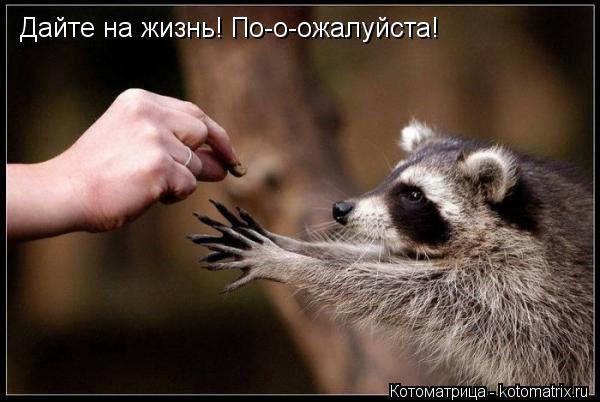 Котоматрица: Дайте на жизнь! По-о-ожалуйста!