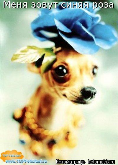 Котоматрица: Меня зовут синяя роза