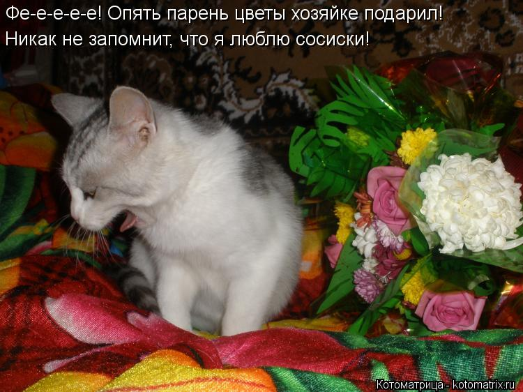 Котоматрица: Фе-е-е-е-е! Опять парень цветы хозяйке подарил! Никак не запомнит, что я люблю сосиски!