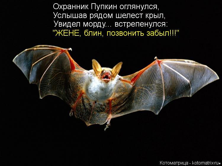 """Котоматрица: Охранник Пупкин оглянулся, Услышав рядом шелест крыл, Увидел морду... встрепенулся: """"ЖЕНЕ, блин, позвонить забыл!!!"""""""