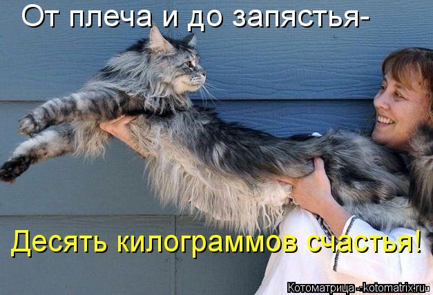 Котоматрица: От плеча и до запястья- Десять килограммов счастья!