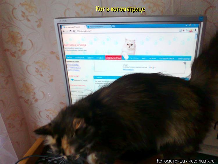 Котоматрица: Кот в котоматрице