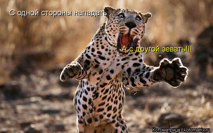 Котоматрица: С одной стороны нападать... А с другой зевать!!!